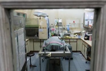 """السلحفاة """"الحصالة"""" تدخل في غيبوبة بعد استخراج 915 عملة معدنية من بطنها"""