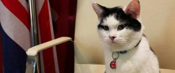 """السفارة البريطانية بالأردن تمنح """"قطاً"""" منصباً في السفارة (صورة)"""