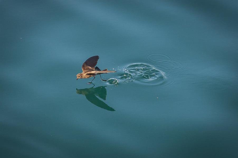 صور من الحياة البرية في جزر غالاباغوس بالإكوادور