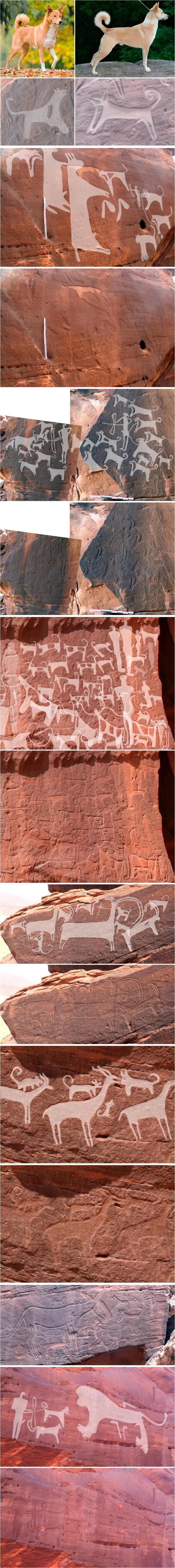 بالصور اكتشاف أثري في صحراء حائل نقوش صخرية تُوثق علاقة البشر والكلاب منذ 8 آلاف 75217fa9-97c3-4813-9