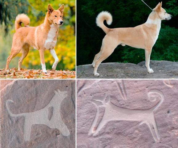 بالصور اكتشاف أثري في صحراء حائل نقوش صخرية تُوثق علاقة البشر والكلاب منذ 8 آلاف f9a167fb-0993-420a-9